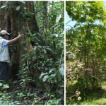 """EL ESPIRITU DE LAS """"PLANTAS SOLDADO"""" EN LA COSMOVISION AMAZONICA DE MADRE DE DIOS- PERU"""