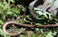 Simbolismo de  sapos y culebras en la cosmovisión andina